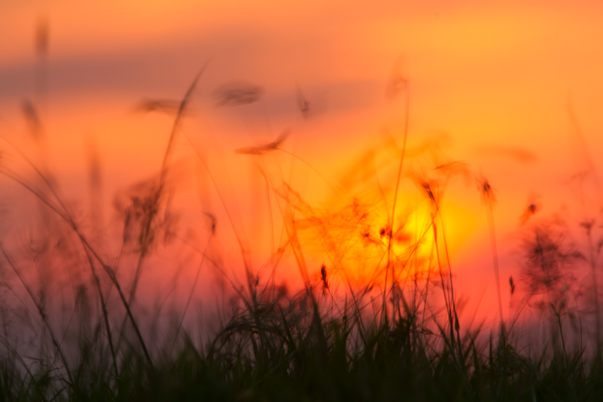 Burning Grass | KTSI-98