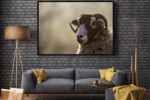 Swaledale | Wall Art