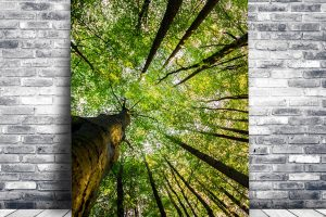 Tree Cathedral | Wall Art