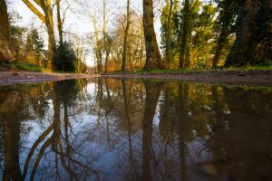 Puddle and Trees