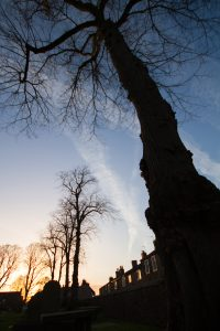 Trees in Whalley