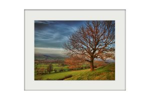 Autumn Tree | Mounted Print