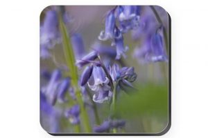 Bluebell Coaster