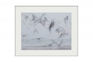 Ghost Birds | Mounted Print