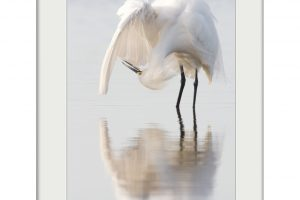 Mirrored Dancer | Mounted Print