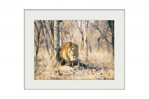 African Reflections | Mounted Print