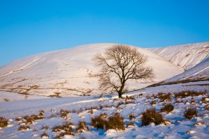 Blue and White Pendle