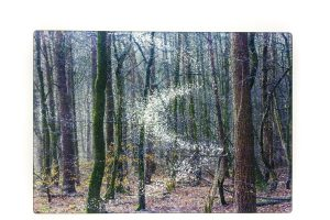 Spring Woods | Glass Chopping Board