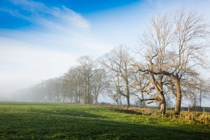 Mearley Mist