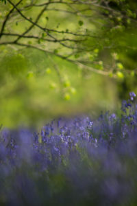 Bluebell's Palace