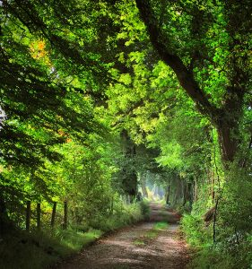 Forest Path | KTSD-4
