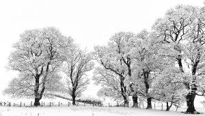 Winter Trees   KTSD-1