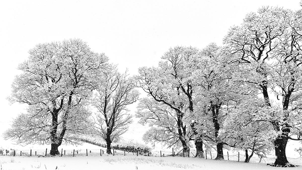 Winter Trees | KTSD-1
