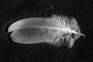 Just a Feather | AB-29