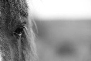 Moor Pony | KTSI-12