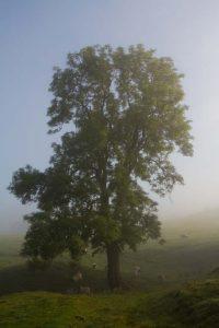 Pastel Tree   KTSI-16