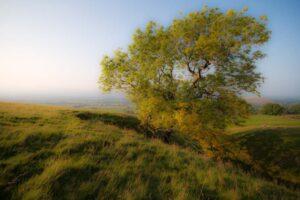 September Tree | KTSI-21