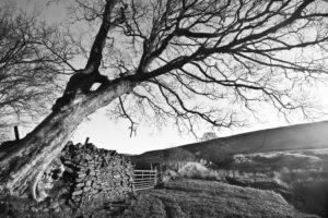 January Tree | KTSI-4
