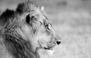 Eyes on Africa   AM-47