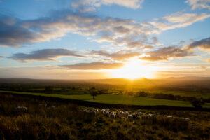 Evening Pasture | KTSI-207