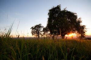 Summer Meadow | FE-27
