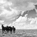 Horses on the Plains | OW-AZ2