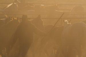 Cowboy at Dawn | OW-W1