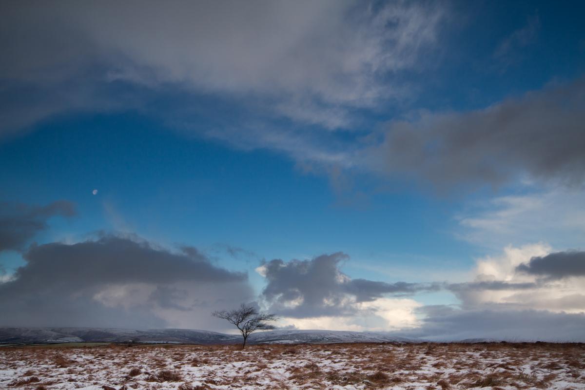 Tree and Moon | KTSI-2082