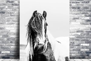 Gypsy Horse | Wall Art