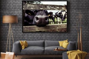 Nosy Cow | Wall Art