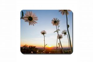 Daisies Cork Placemat 2