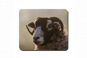 Swaledale Sheep Cork Placemat 2