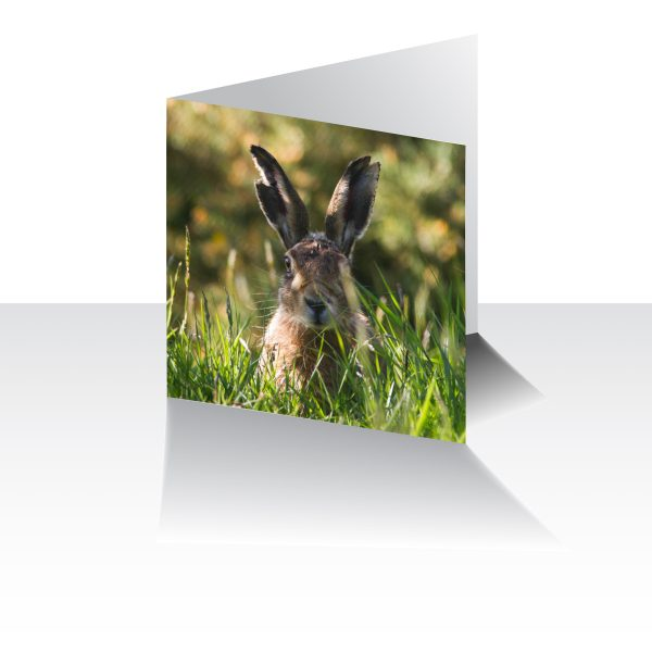 Old Hare Greeting Card