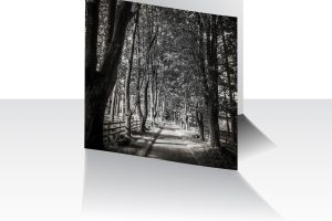 Treelined Path Greeting Card