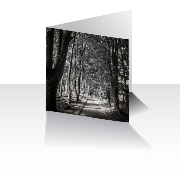 Treelined Path Greeting Card