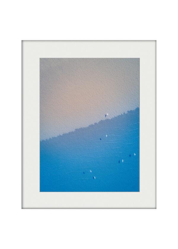 Coastal Flight | Mounted Print