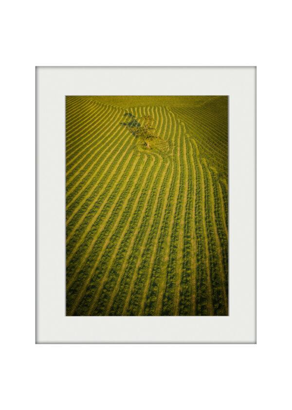 Cut Fields | Mounted Print