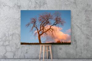 Dancing Tree | Aluminium Print