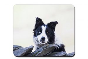 Collie Placemat