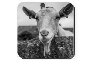 Goat Coaster