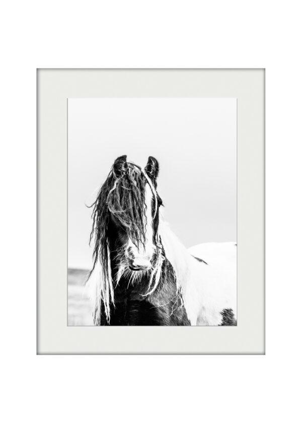 Gypsy Cob | Mounted Print