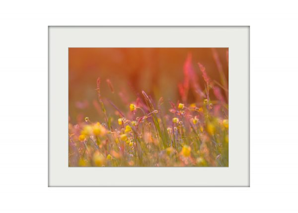 May Meadow | Mounted Print
