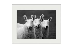 Three Amigos | Mounted Print