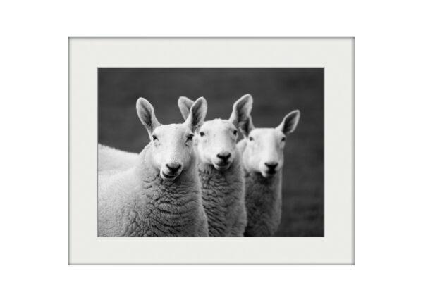 Three Amigos | Mounted Print