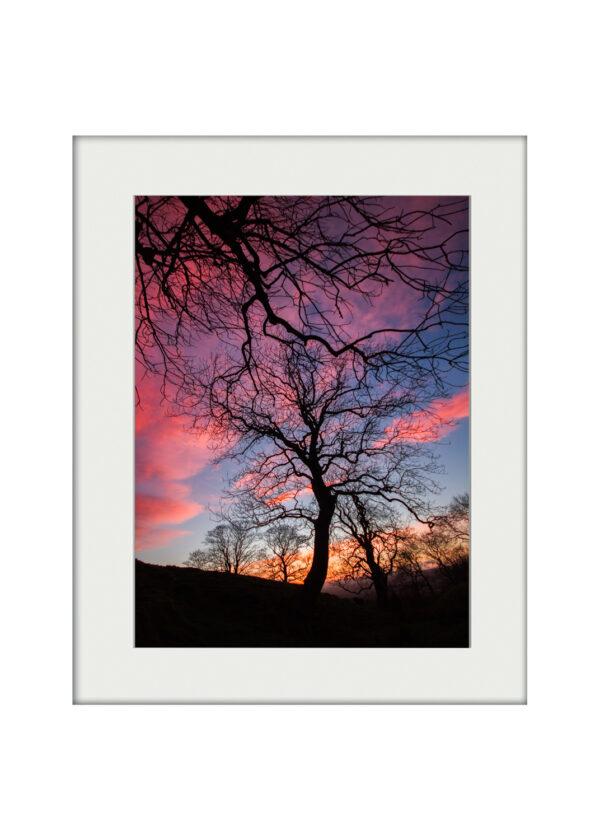 Painted Skies   Mounted Print