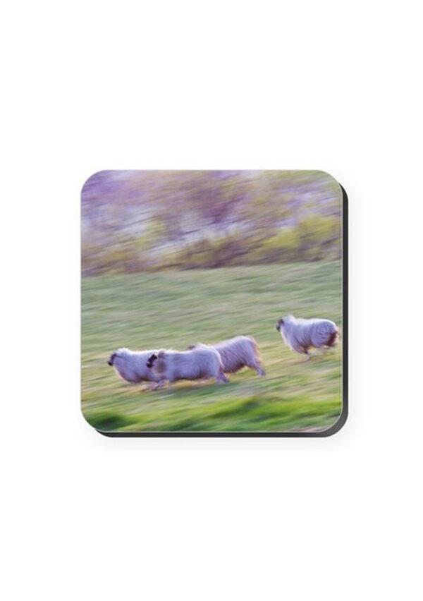 Running Sheep Coaster