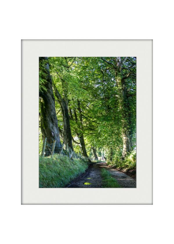 September Walk | Mounted Print