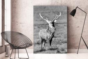 Sika Stag | Aluminium Print