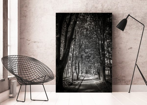 Treelined Path | Aluminium Print