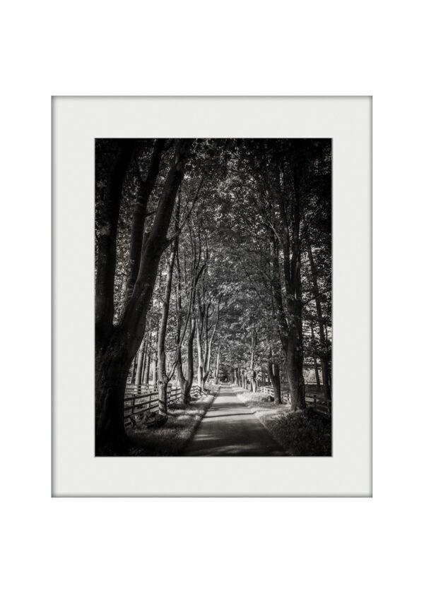 Treelined Path | Mounted Print